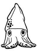 Poor Mojo's Giant Squid